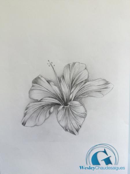 Dessin fleur d hibiscus pour tatouage tatouage - Tatouage fleur d hibiscus ...